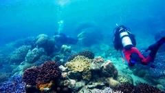 Us coral diversity