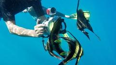 Us curious batfish