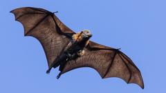 Us bat and baby bat