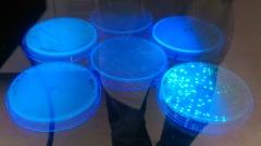 Cs 4 fluorescent e.coli